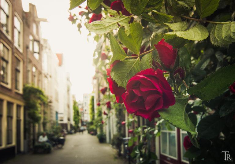 Amsterdam – Eine Stadt und ihre Klischees